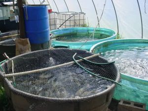 Flaherty's Fish Farm