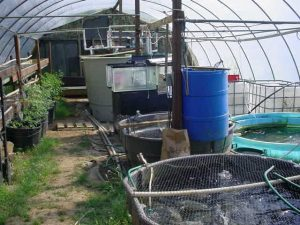 Flaherty's Fish Farm